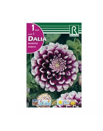 ROCALBA DALIA D.EDINBURGH 1 UN