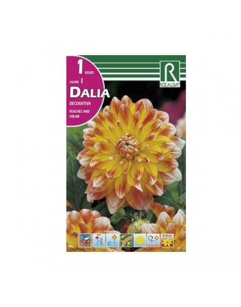 ROCALBA DALIA D.PEACHES CREAM 1 UN