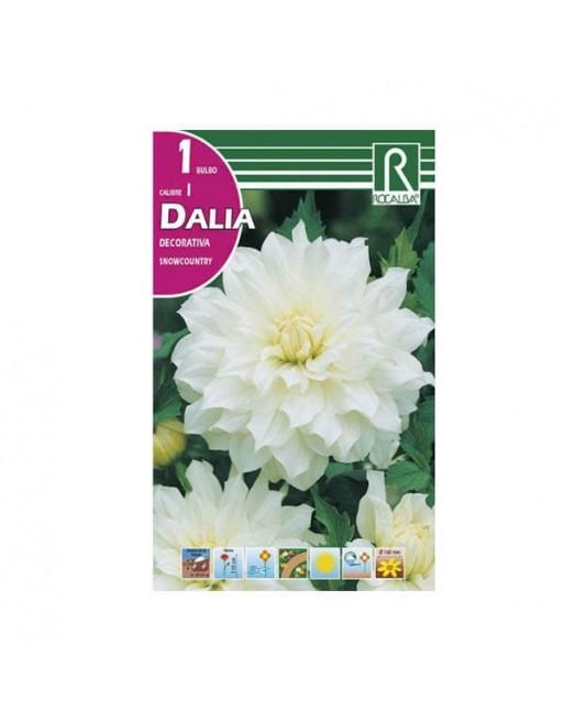 ROCALBA DALIA D.SNOWCOUNTRY 1 UN