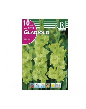 Bulbo gladiolo verde