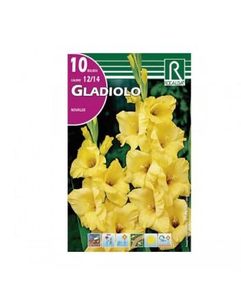 Bulbo gladiolo amarillo