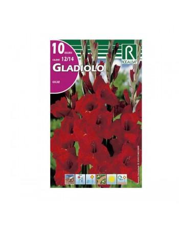 Rocalba gladiolo oscar rojo
