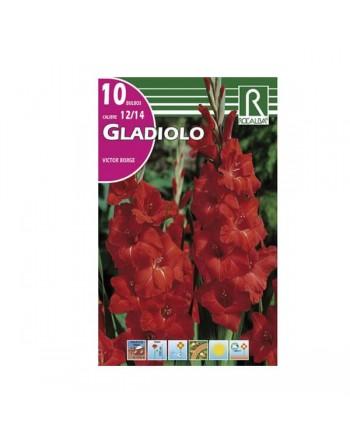 Bulbo gladiolo rojo