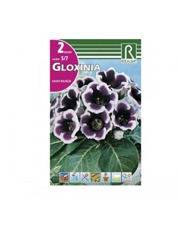 ROCALBA GLOXINIA KAISER W.2 UN