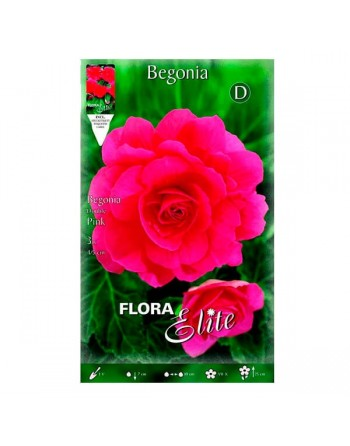 Bulbo begonia rosa