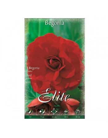 Elite bulbo begonia doble red