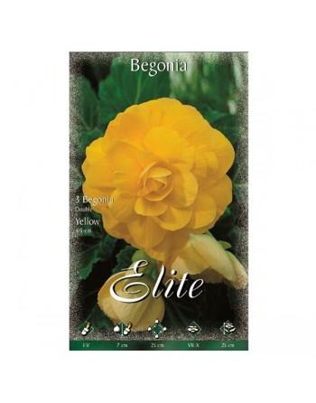 Elite bulbo begonia amarillo