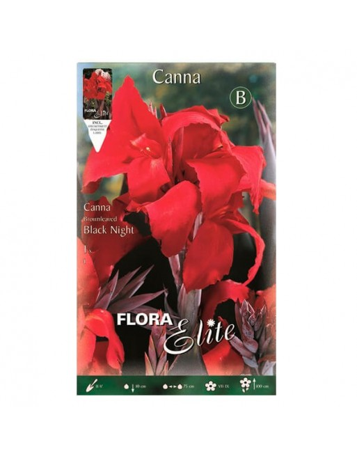 ELITE CANNA BLACK NIGHT 1 UN