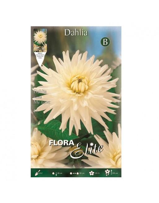 ELITE DALIA C.MY LOVE 1 UN