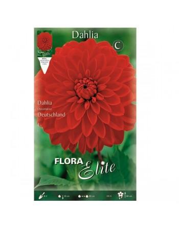 ELITE DALIA D.DEUTSLAND 1 UN