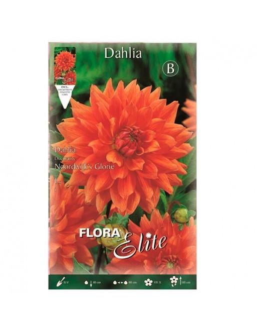 ELITE DALIA D.NOORDW.GL.1 UN