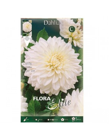 ELITE DALIA D.POLAR ICE 1 UN