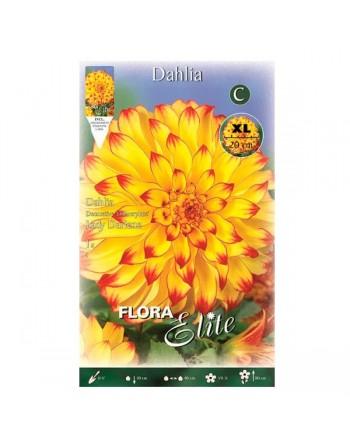 ELITE DALIA D.XL LADY DARLENE 1 UN