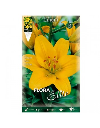 ELITE LILIUM ASIATIC YELLOW 1 UN