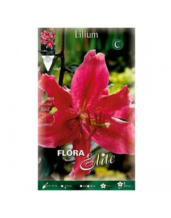 ELITE LILIUM O.RED 1 UN